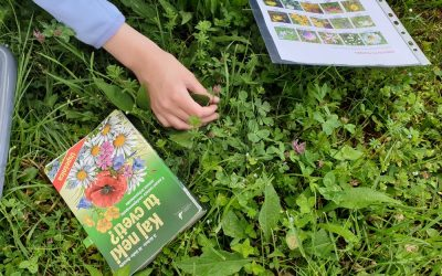Učni travnik